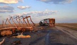 Два человека и 39 лошадей погибли в ДТП в ЗКО