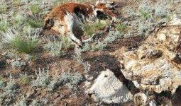 Трупы зараженных животных нашлина несанкционированной свалке близ Семея
