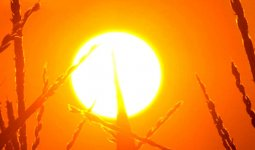 Синоптики предупреждают о сильной жаре в Казахстане