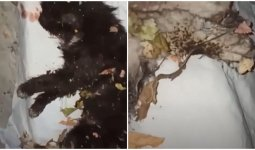 Девочки-живодеры задушили и подожгли кошку в Алматы