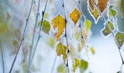 Заморозки и снег: штормовое предупреждение объявлено в 10 областях РК