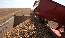 Сезон урожая: 76 миллиардов тенге выделено государством на полевые и уборочные работы