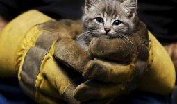 Тела мертвых котят забили канализационные трубы в Караганде