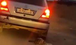 Собаку привязали к автомобилю и протащили по дорогам Уральска