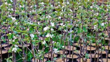 80% саженцев плодовых деревьев Казахстан завозит из-за рубежа