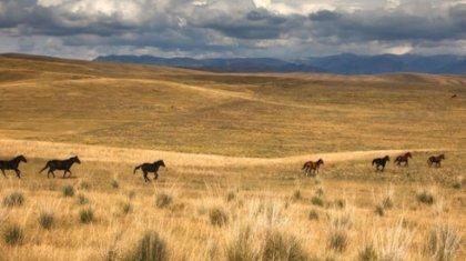 Комиссию по земельной реформе создадут в Казахстане