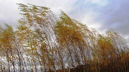 Штормовое предупреждение объявлено в девяти регионах Казахстана