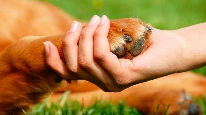 Совет по вопросам защиты животных создадут в Нур-Султане
