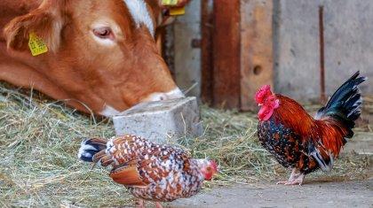 Рост особо опасных болезней среди животных отмечается в Казахстане