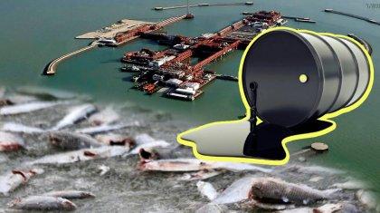 Гибель рыб и тюленей, аварии и огромные расходы: аналитики оценили полное освоение Кашагана
