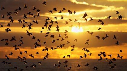 150 видов птиц могут исчезнуть в Казахстане