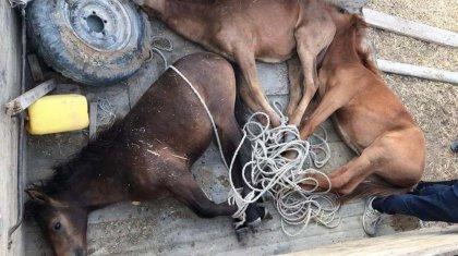 500 голов скота погибло из-за засухив Кызылординской области