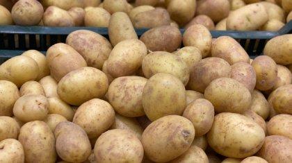 500 тенге за кило: цены на картофель взлетели в регионах Казахстана
