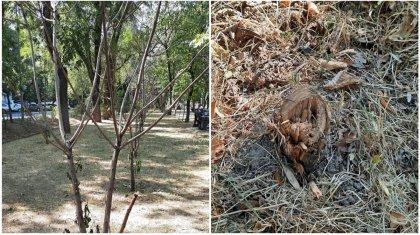 Деревья высыхают из-за сильной жары в Алматы