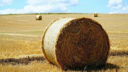 Вывоз сена и овса планируют запретить в Казахстане