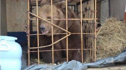 Пострадавшую от укуса медведя девочку ввели в кому в Костанайской области