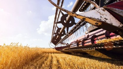 12 миллионов тонн зерна намолочено в Казахстане