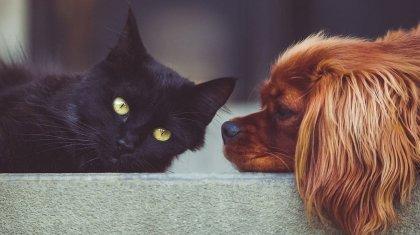 Стали известны сроки введения обязательного чипирования кошек и собак в Казахстане