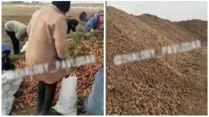 Тонны моркови и картофеля нового урожая выкинули в Павлодарской области
