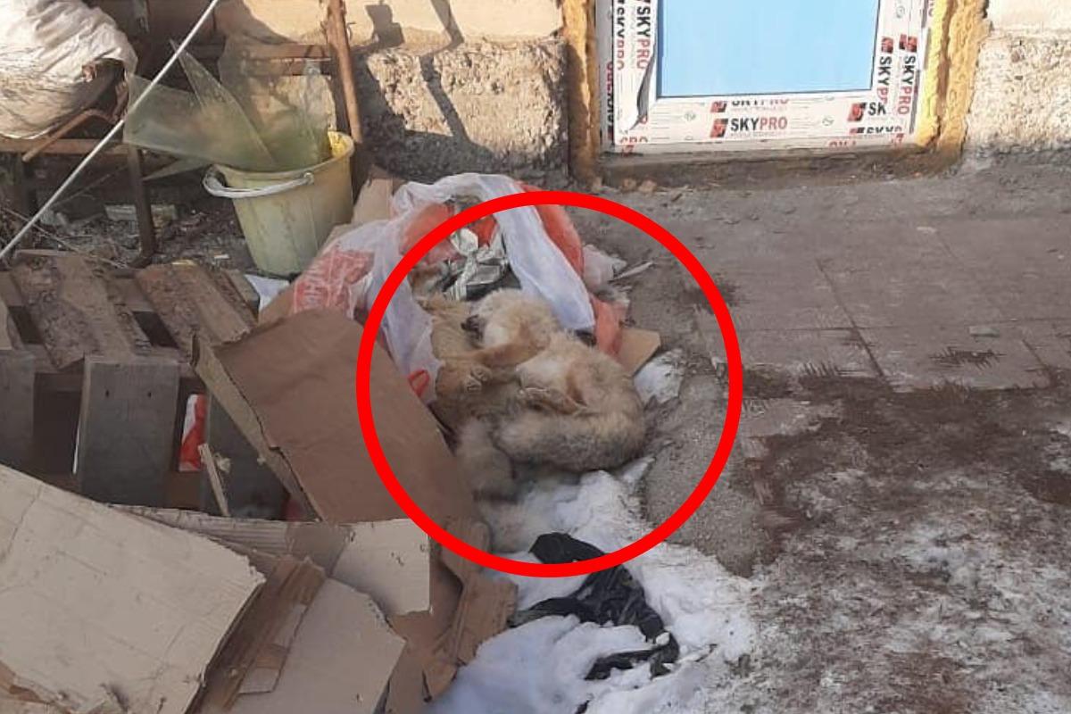 Жители Алматинской области убивали диких животных ради шкур в своем доме 3